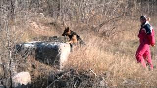 Осенние приключения собак-спасателей в г.Кривой Рог