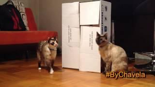 Cómo hacer una casa de cartón para gatos