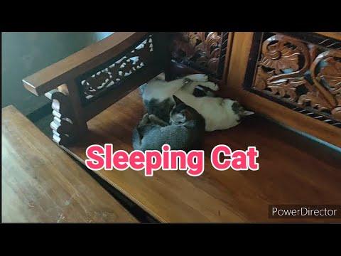 kucing-kampung-tidur-siang.