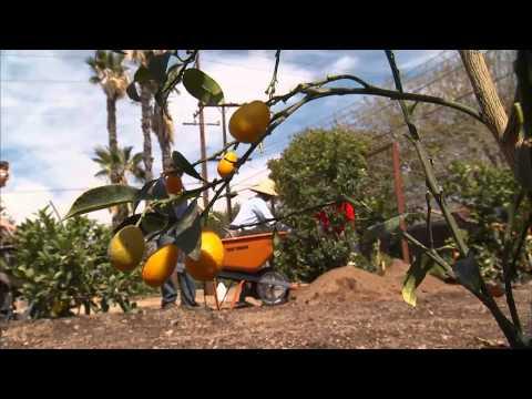 Healthy Communities; Healthy County: San Bernardino, Calif.