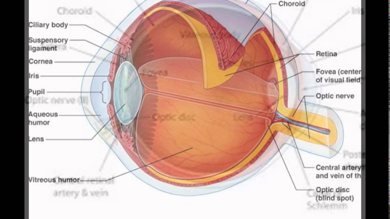 About Human Eye Structure And Function - YouTube