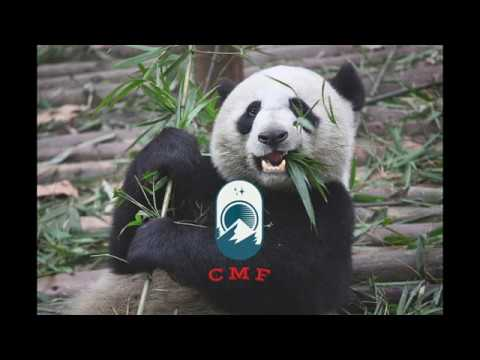 Charismatic Megafauna & Raptors: Where did we go wrong?   CMF Podcast Corrections 1.1 & 1.2