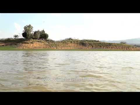 Sailing on Denwa river to reach Satpura Natioinal Park