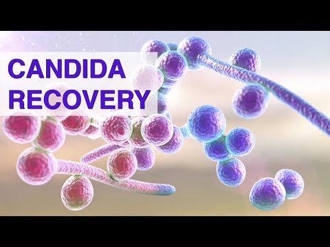 candida-recovery---the-complete-guide-on-the-superfeast-podcast