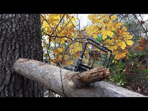 Catfish For Sale >> Koro Squirrel Trap Review - YouTube