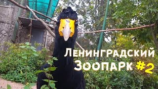 Места Петербурга. Ленинградский зоопарк. Продолжение.