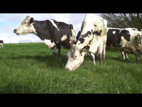 Origin Green dairy farmer Joe Hayden shares his sustainable dairy farming experience