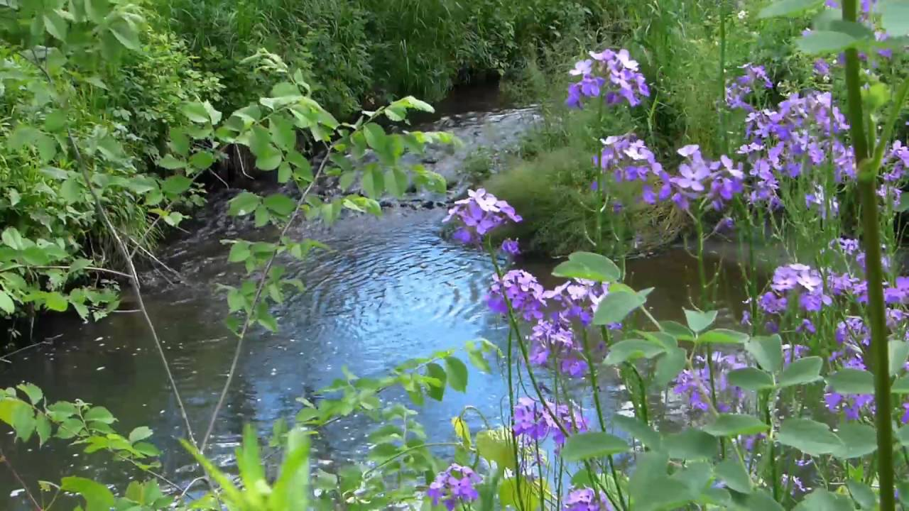 Tropical Island Beach Ambience Sound: Gentle Flowing Stream With Relaxing Nature Sounds