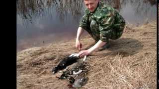 полювання риболовля Р . Комі