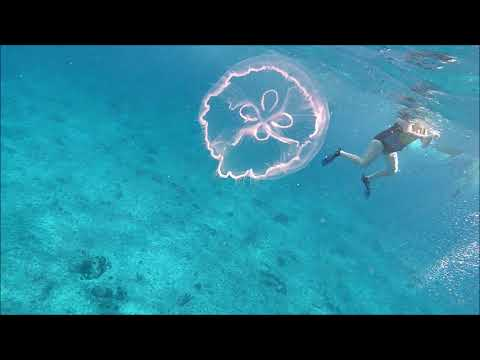 Cozumel 2019 Jelly Fish