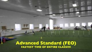 Bliss  Starter Games Dog Title   Dog Agility Ontario Trial   Jan 12 2014