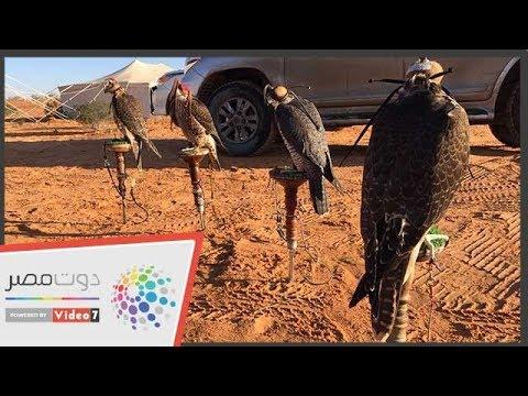 من ينقذ الطيور النادرة من مخالب الأسرة القطرية الحاكمة؟  - 18:54-2018 / 11 / 3