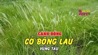 Video Đồng Cỏ Lau Vũng Tàu - Quang Thành Art download MP3, 3GP, MP4, WEBM, AVI, FLV Oktober 2018