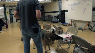Maryland Dog Training   N O S E   Clip Of A  Class In   Action