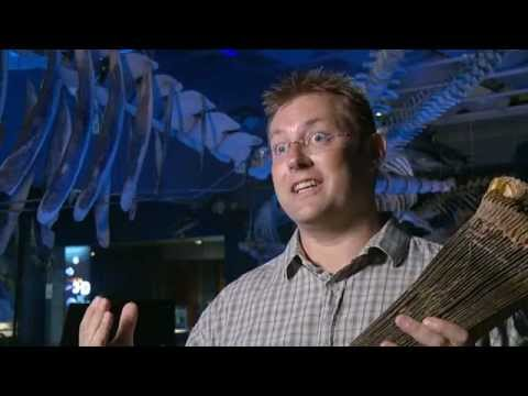 Pygmy Right Whales - Tales from Te Papa episode 101