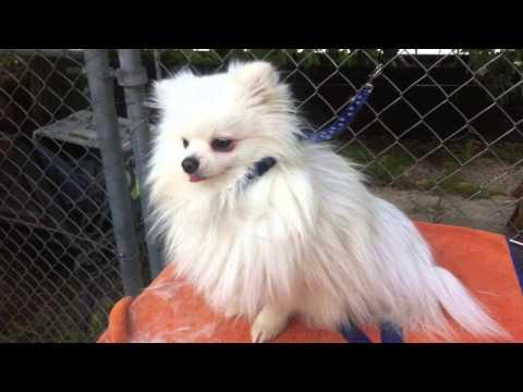 Hundesalon Geraldine