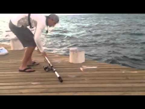 Turks and Caicos Unique Tours and Rentals (surf fishing)