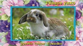 Рваное ушко Э. Сетон-Томпсон (аудиосказка для детей)
