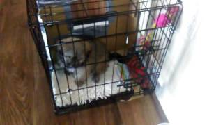 How to potty train puppy in crate. Pet apartment.