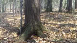 Finding History 11: Metal Detecting The Woods