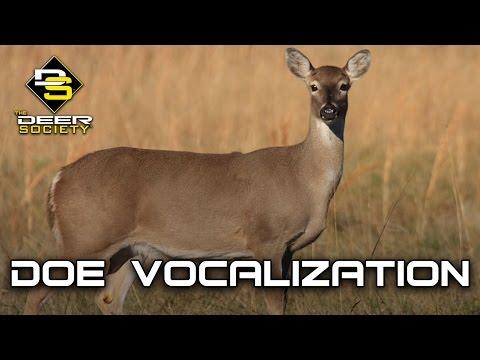 Doe Vocalizations
