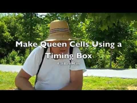 Queen Cell Timing Box by FatBeeMan
