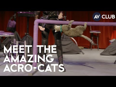 Meet The Amazing Acro-Cats, an all-cat circus troupe