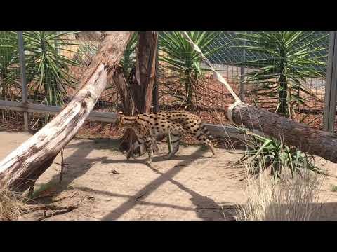 New attraction at Tasmania Zoo