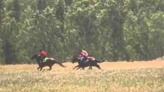 Краснотуранск 2 скачка 2015(Лошади-Horse–Animal-racing-конь-смотреть-онлайн-скачки)