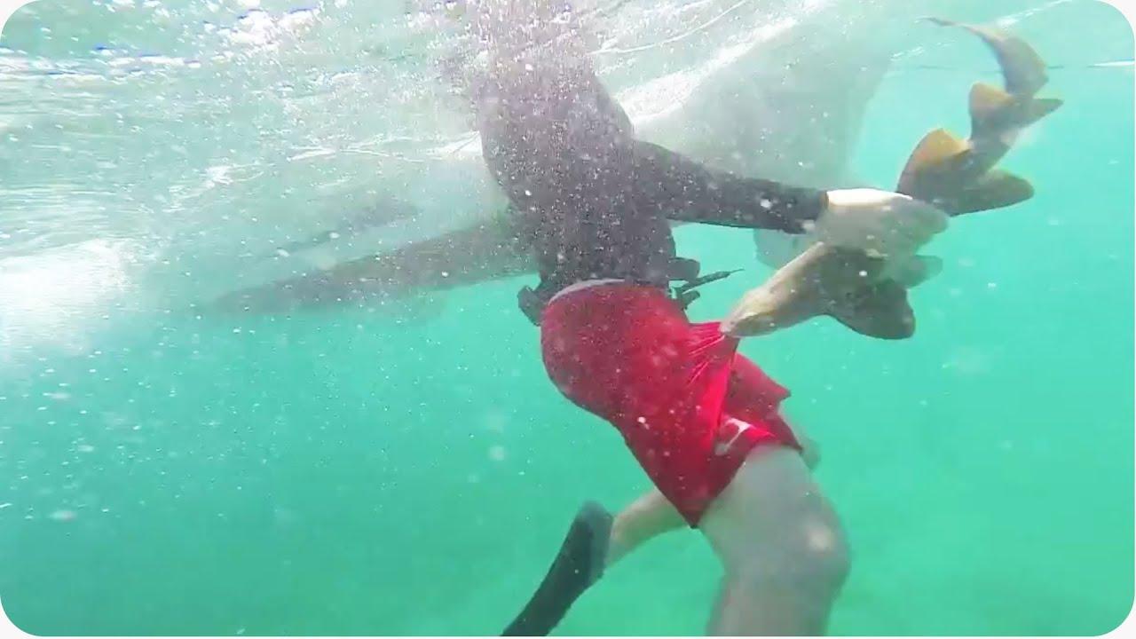 Shark Bite Jacksonville Beach