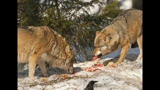 Dạy bé học tên con vật và các hành động  Bài 3