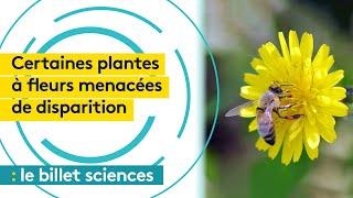 Environnement : de nombreuses plantes à fleurs menacées de disparition