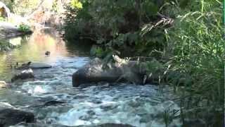 Encino, California - Sepulveda Basin Recreation Area HD (2011)
