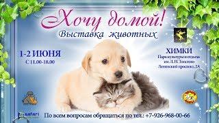 Благотворительный фестиваль и выставка кошек и собак