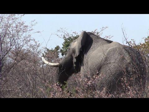Hunting Bushmanland with SMJ SAFARIS