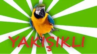 Papağan Ve Muhabbet Kuşu YakiŞikli Konuşma Eğitim Sesi Isim öğretme 1 Saat