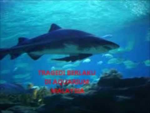 Kemalangan Di Aquarium Malaysia Travel Video