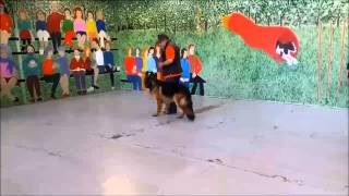 Dog Training Melbourne - Dog Boot Camp - K9 Workouts