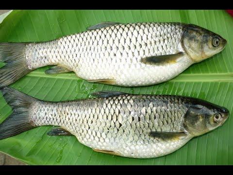 Simple Catla Fish Fry Recipe | Amazing Taste Fish Fry | VILLAGE FOOD