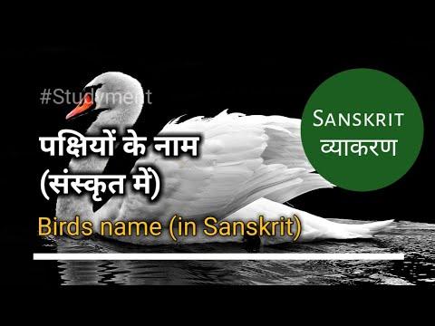 संस्कृत में पक्षियों के नाम | Birds Name In Sanskrit | Studyment