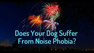 Is Your Dog Afraid of Fireworks?