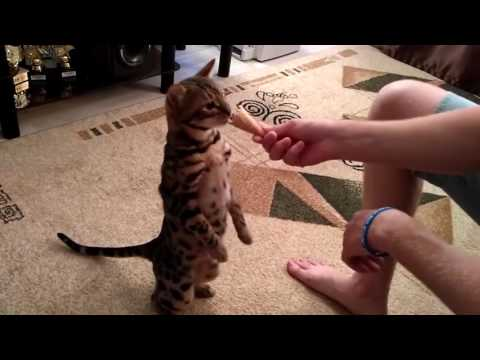Funny cats,  funny dogs, cute animals - Animal Compilation June 2016 | Funny Berry Animals #74