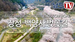 [장성여행]  장성 백양사 벚꽃길    Cherry B…