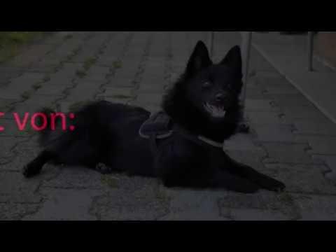 Hunde Kamera