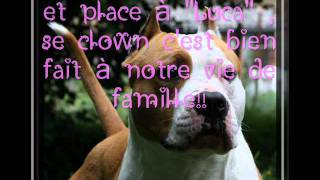ethic of dream. elevage american staffordshire terrier