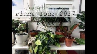 Plant Collection Tour 2017 | Urban Loft & Indoor Jungle