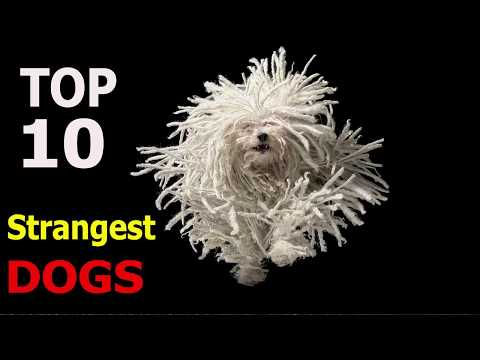 Top 10 Strangest dog breeds | Top 10 animals