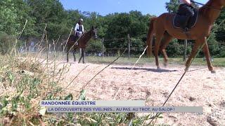Yvelines | Randonnée équestre : Découverte des Yvelines … au pas, au trot ou au galop !