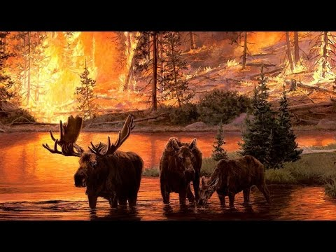 Wildlife Face The Heat in Firestorm National Geographic Documentary