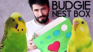 How to make a Budgie Nest - BUDGIE BREEDING & Budgie Nest Box